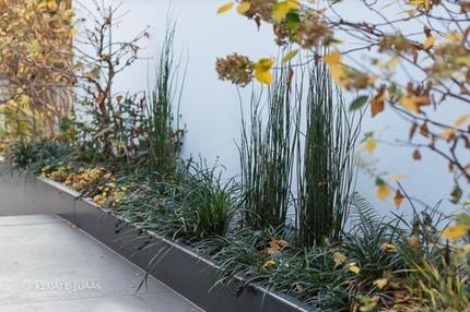 Vorgärten Modern vorgarten modern gestalten und pflegeleicht bepflanzen